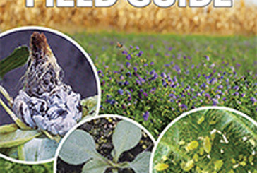 Experts offer production tips in 2014 crop guide