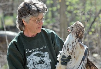 Injured red tail hawk rescued