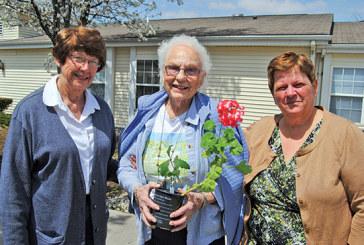 Kentonite helps geranium plant survive for more than 100 years