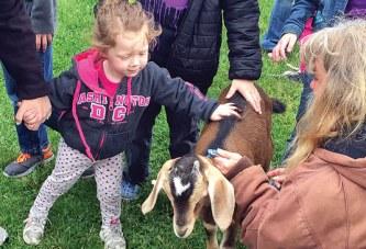Good goat