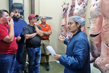 County fair champion carcasses evaluated