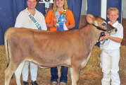Steer and dairy awards