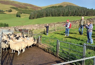 Area sheep producers gain insight into methods abroad