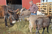 Donkeys, goats and more find a home at Lightners' Cattail Farm