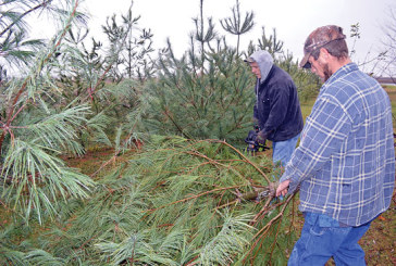 Free trees for Christmas