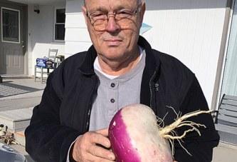Big turnip