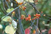 Plant coils around trees, shrubs