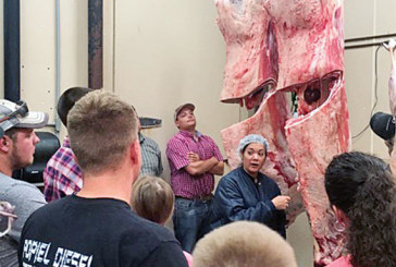 OSU professor evaluates fair champion carcasses