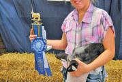 Lamb winners