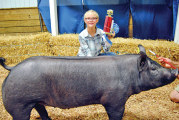 Top hog showmen take center stage at 2016 Hardin County Fair