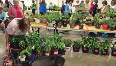 Plenty of plants on display at last year's plant sale