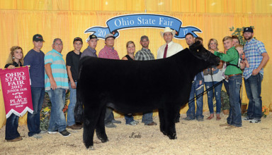 Strong steer showing