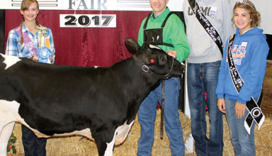 17 and 18 dairy beef showman