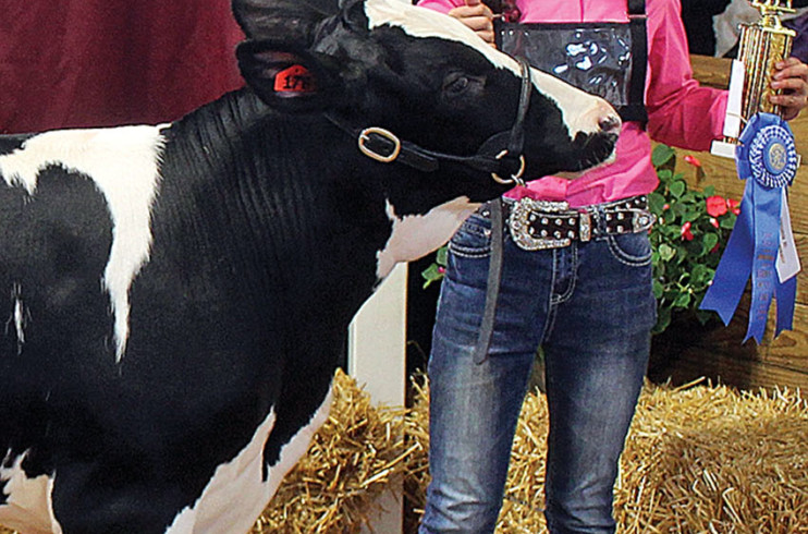 13-year-old dairy beef showman