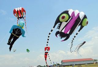 Kites soaring