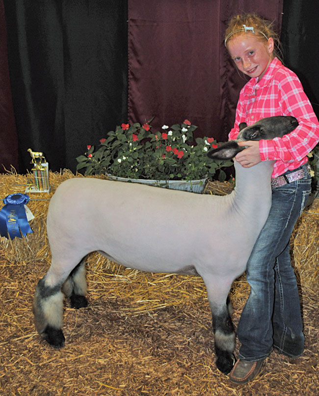 Sheep Shine At County Fair Kenton Times