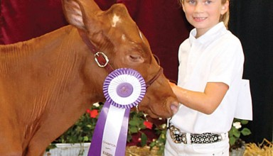 Milking Shorthorn winner