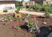 Annual Garden planted at Friendship Gardens